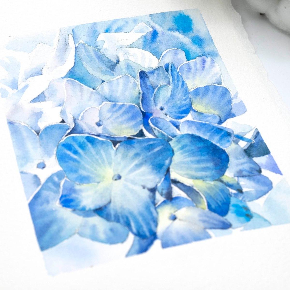 繡球花水彩分享